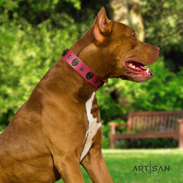 Pitbull daily walking natural leather collar for your stylish four-legged friend