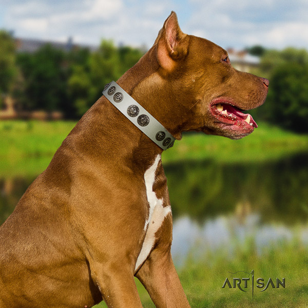 Pitbull basic training full grain natural leather collar for your stylish pet