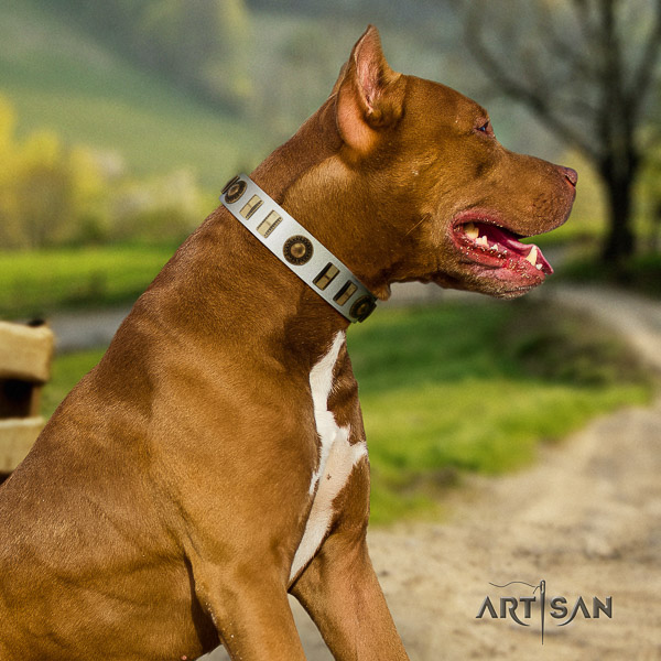 Pitbull basic training genuine leather collar for your handsome pet
