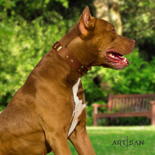 Pitbull everyday walking full grain genuine leather collar for your attractive doggie