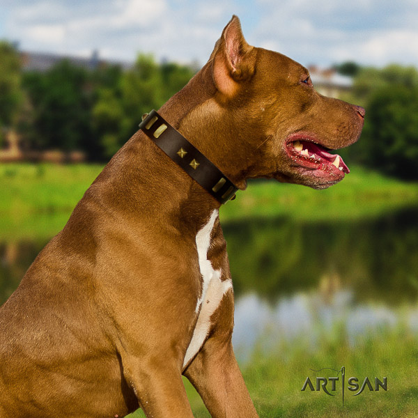 Pitbull everyday use genuine leather collar for your impressive canine