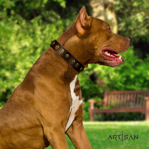 Pitbull everyday use natural leather collar for your impressive canine