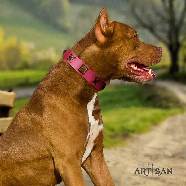 Pitbull daily use genuine leather collar for your lovely four-legged friend