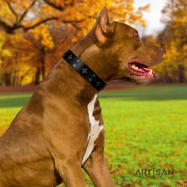 Pitbull walking full grain genuine leather collar for your attractive four-legged friend