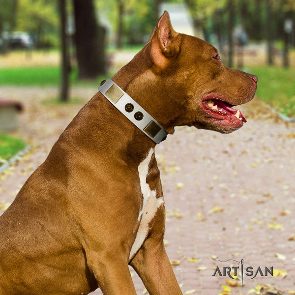 Pitbull everyday walking leather collar for your beautiful doggie