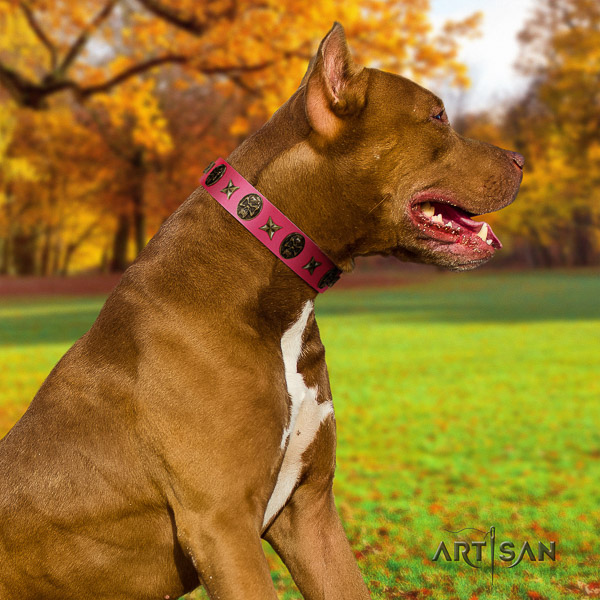 Pitbull basic training full grain genuine leather collar for your impressive canine