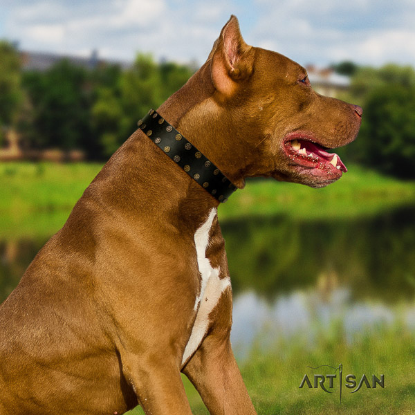 Pitbull daily walking genuine leather collar for your beautiful four-legged friend
