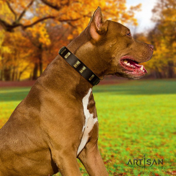 Pitbull everyday use full grain natural leather collar for your handsome doggie