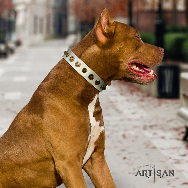Pitbull daily walking full grain genuine leather collar for your stylish canine