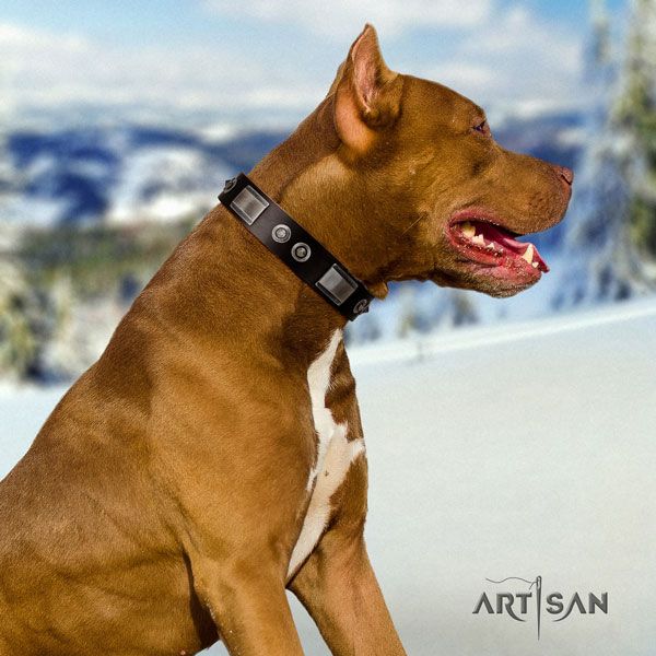 Pitbull handcrafted genuine leather dog collar with inimitable decorations