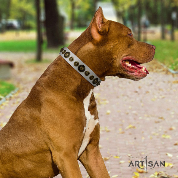 Pitbull comfortable genuine leather dog collar with stylish studs