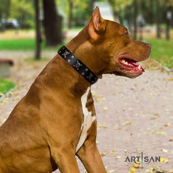 Pitbull basic training full grain natural leather collar for your beautiful dog