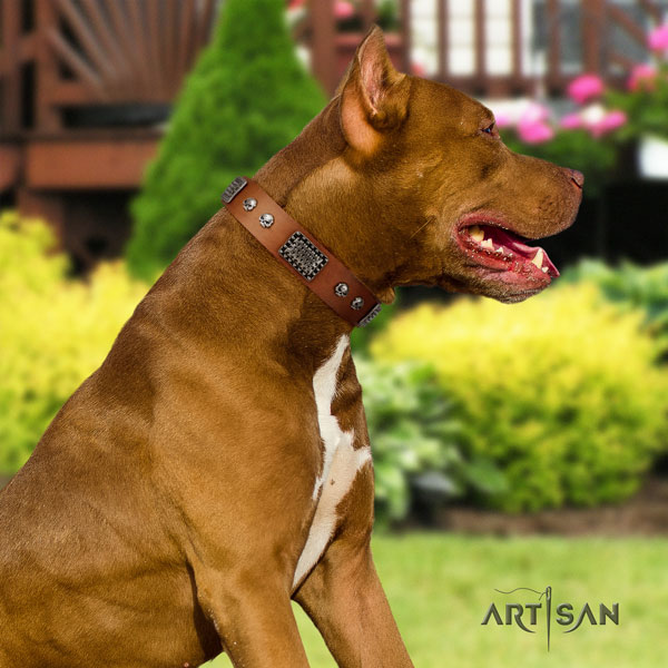 Pitbull fine quality full grain genuine leather dog collar with fashionable studs