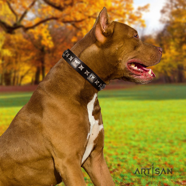 Pitbull convenient natural genuine leather dog collar with exceptional embellishments