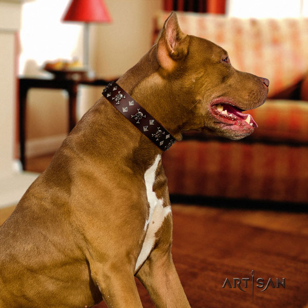 Pitbull fine quality genuine leather dog collar with extraordinary studs