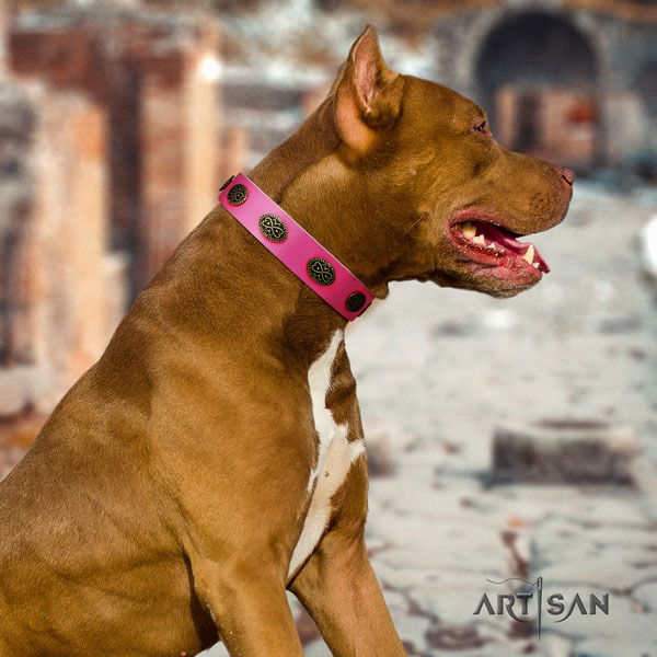 Pitbull easy to adjust full grain natural leather dog collar with fashionable studs