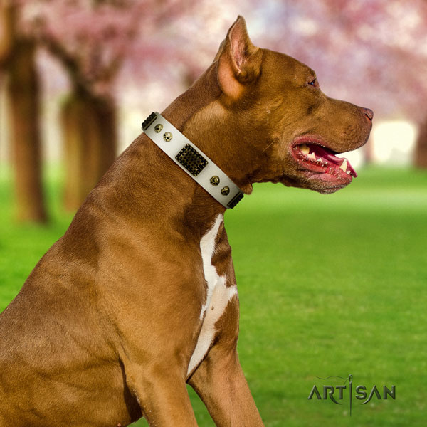 Pitbull handmade full grain natural leather dog collar with remarkable adornments