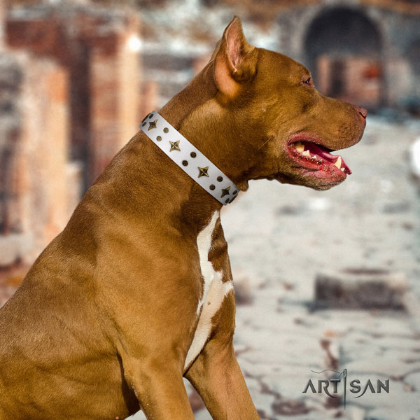 Pitbull handmade full grain natural leather dog collar with top notch decorations
