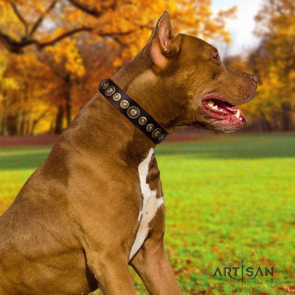 Pitbull easy wearing full grain genuine leather dog collar with stylish design decorations