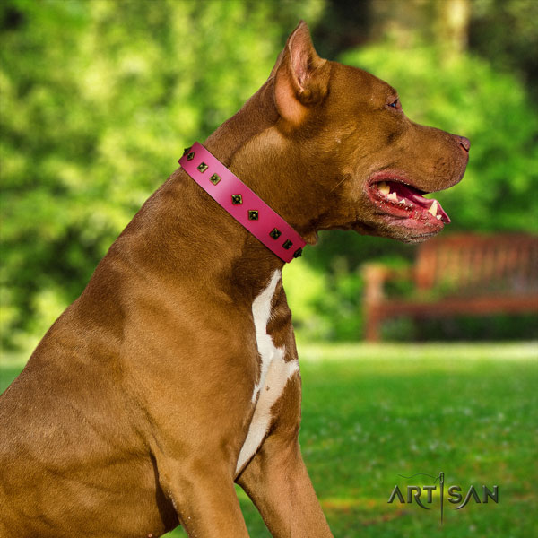 Pitbull handcrafted genuine leather dog collar with trendy adornments