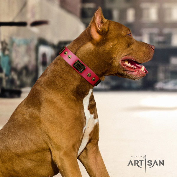 Pitbull easy wearing natural genuine leather dog collar with significant adornments