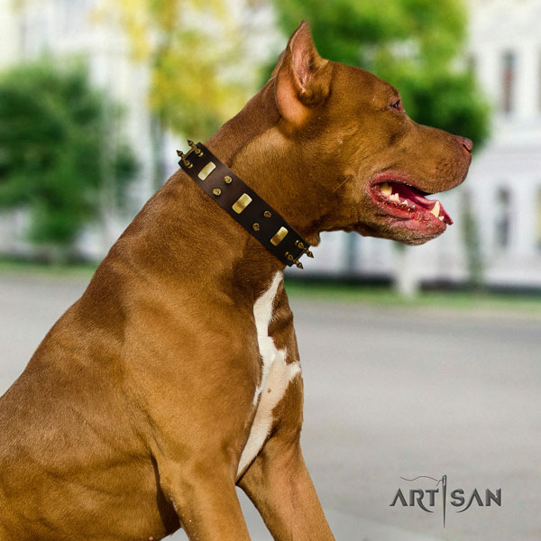 Pitbull easy to adjust leather dog collar with remarkable studs