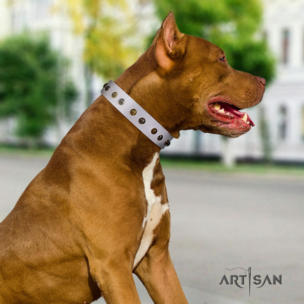 Pitbull easy adjustable genuine leather dog collar with awesome decorations