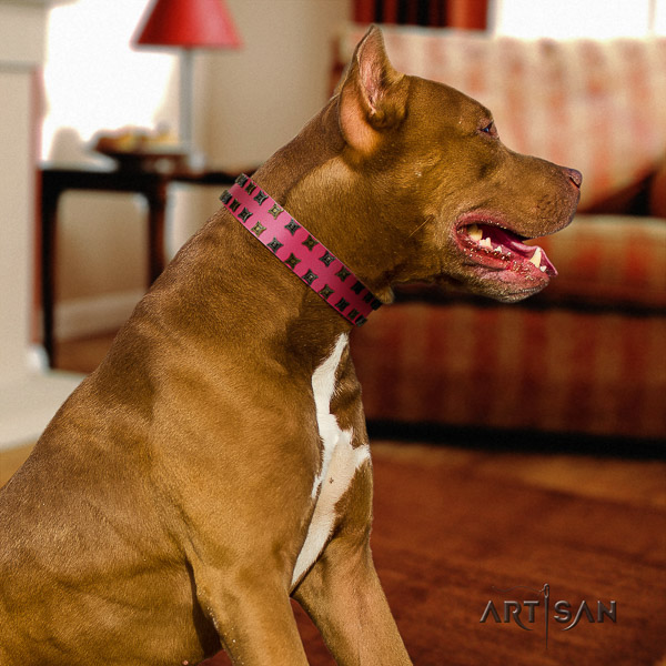 Pitbull handy use full grain leather collar for your beautiful four-legged friend