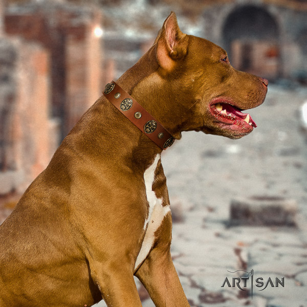 Pitbull everyday use full grain natural leather collar for your beautiful canine