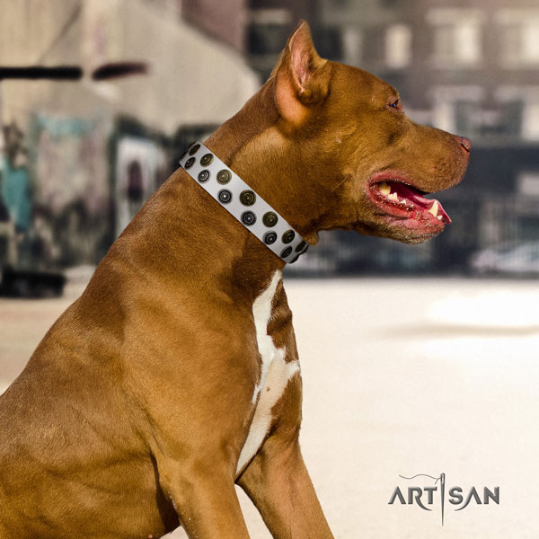 Pitbull handmade full grain natural leather dog collar with exceptional decorations