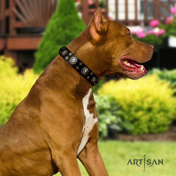 Pitbull best quality genuine leather dog collar with remarkable decorations