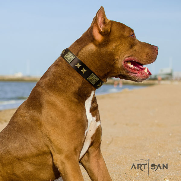 Pitbull easy to adjust genuine leather dog collar with stylish adornments