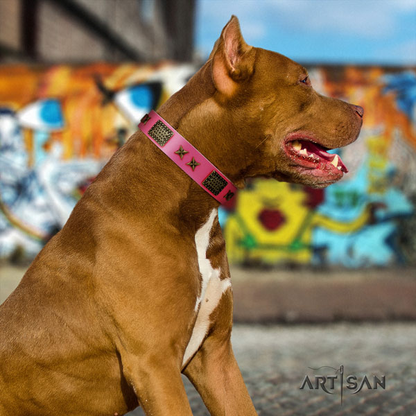 Pitbull best quality full grain leather dog collar with significant embellishments