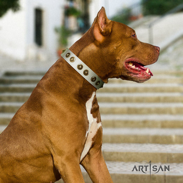 Pitbull everyday use leather collar for your impressive canine