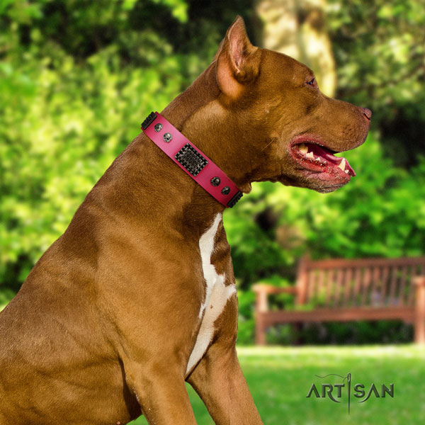 Pitbull easy adjustable full grain natural leather dog collar with stylish adornments