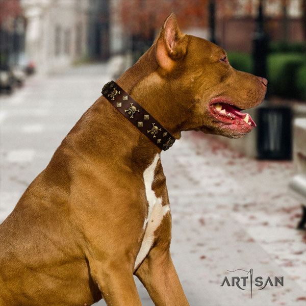 Pitbull top quality genuine leather dog collar with awesome studs