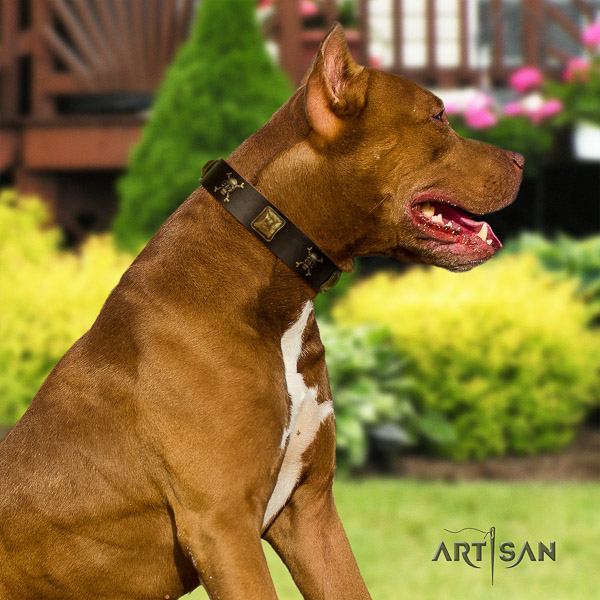 Pitbull walking natural leather collar for your impressive four-legged friend