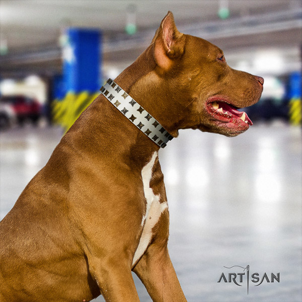 Pitbull walking full grain natural leather collar for your handsome four-legged friend