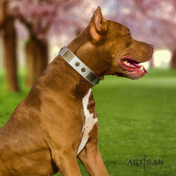 Pitbull comfortable wearing genuine leather collar for your lovely doggie