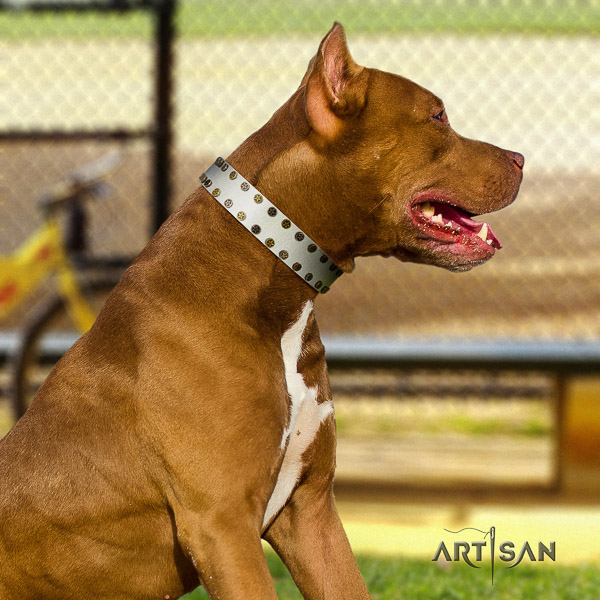 Pitbull daily walking full grain natural leather collar for your handsome doggie