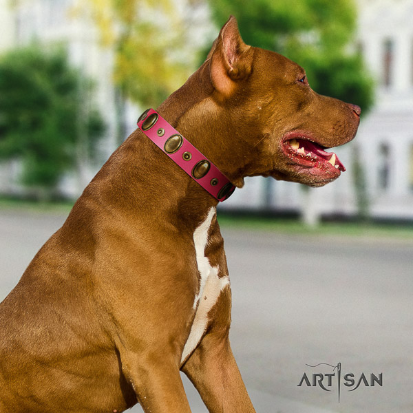 Pitbull basic training leather collar for your impressive dog