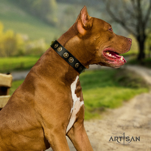 Pitbull handy use genuine leather collar for your beautiful pet