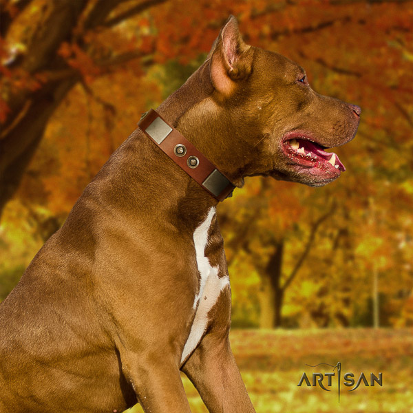 Pitbull daily use natural leather collar for your lovely four-legged friend