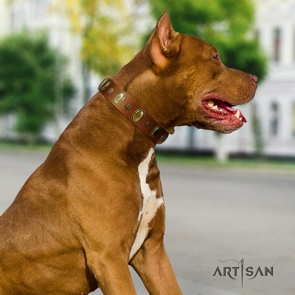 Pitbull walking full grain leather collar for your impressive canine