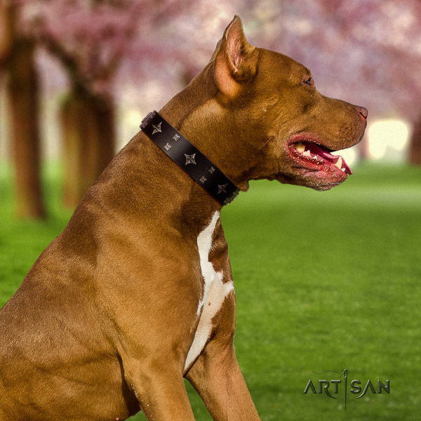 Pitbull handy use full grain genuine leather collar for your handsome dog