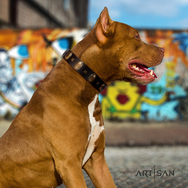 Pitbull daily walking genuine leather collar for your attractive pet