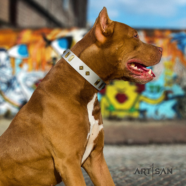 Pitbull easy wearing natural leather collar for your beautiful pet
