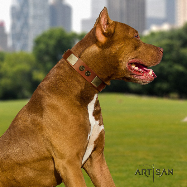Pitbull walking full grain genuine leather collar for your stylish dog