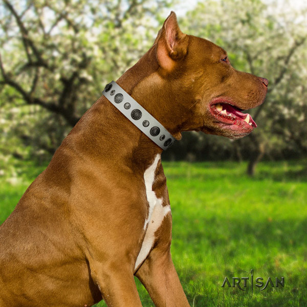 Pitbull easy wearing natural genuine leather dog collar with extraordinary adornments