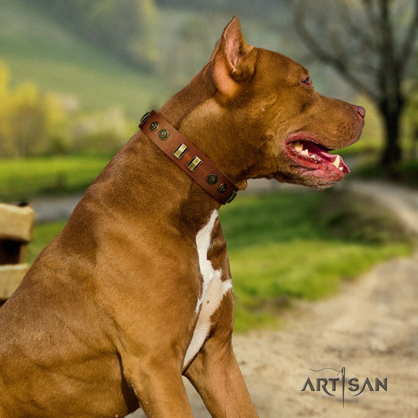 Pitbull easy wearing full grain leather dog collar with impressive adornments
